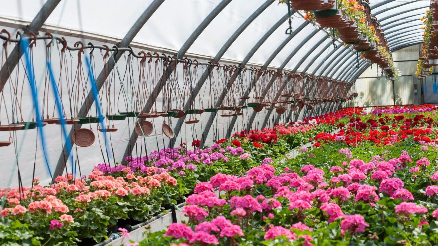 ¿Qué necesita la floricultura para potenciar su producción? Agricultura inteligente