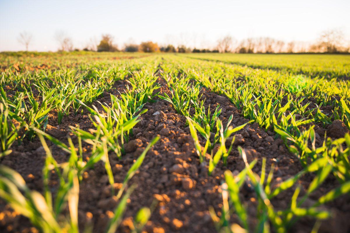 5 ventajas de un sensor de humedad de suelo en agricultura